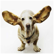 Two Ears and One Mouth: Use Accordingly During Organizational Change